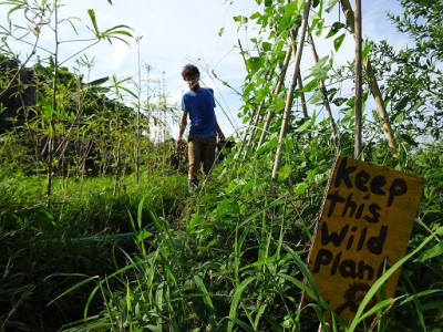 Rise of permaculture – a 'Greener Bali'