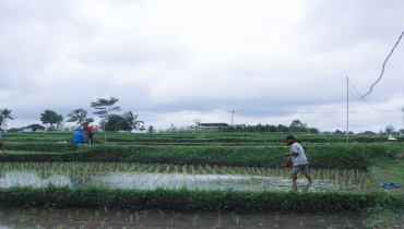 The Fate of Subak in the Midst of the Water Resources Crisis